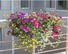 Балконные ящики, ящики для цветов