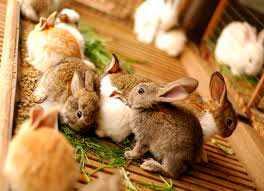 Комбикорм для взрослых кроликов КК-92