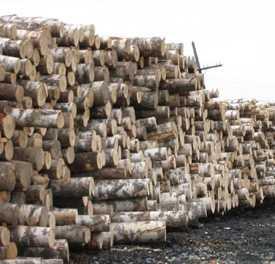Лесоматериалы круглые березовой и и мягких лиственных пород