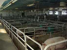 Оборудование станочное для свиноматок