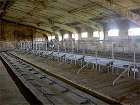 Оборудование стойловое для коров с ОСК-25
