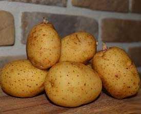 Картофель семенной Уладар 35-55мм (5кг)