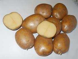 Картофель семенной Веснянка 35-55мм (5кг)