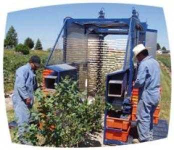 Комбайн для уборки ягод OXBO 930