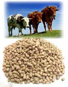 Комбикорм КК-65П для откорма крупного рогатого скота в пастбищный период - ГЛУБОКСКИЙ КОМБИКОРМОВЫЙ ЗАВОД (Беларусь)
