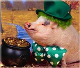 Комбикорм (концентрат) ЭК-С Эконом класса для свиней жирной кондиции - ГЛУБОКСКИЙ КОМБИКОРМОВЫЙ ЗАВОД (Беларусь)