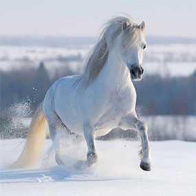 Декор (фотография) на закаленном стекле Galloping White Horse, 40*40 см, INNOVA (Китай)