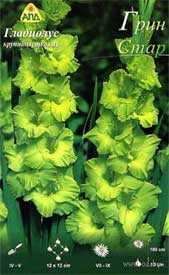 Гладиолус крупноцветковый Грин Стар, 1 шт. - АПД