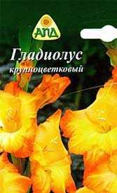Гладиолус крупноцветковый Саншайн, 1 шт. - АПД
