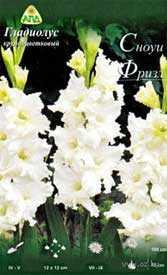 Гладиолус крупноцветковый Сноуи Фризл, 1 шт. - АПД