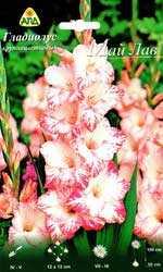 Гладиолус крупноцветковый Май Лав, 1 шт. - АПД