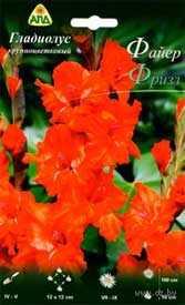 Гладиолус крупноцветковый Файер Фризл, 1 шт. - АПД