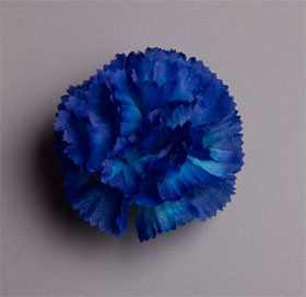 Головка цветочная искусственная Гвоздика малая 81 - ДИШЕР