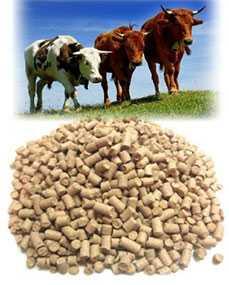 Комбикорм для крупного рогатого скота - СМОРГОНСКИЙ КОМБИНАТ ХЛЕБОПРОДУКТОВ