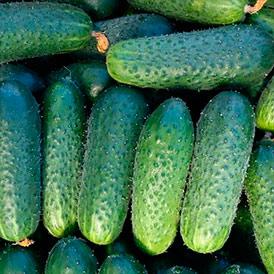 Семена огурцы Корнишон Саунд