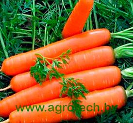 Семена морковь Дордонь F1