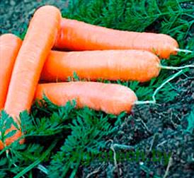 Семена морковь Наталья F1