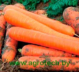 Семена морковь Чемпион F1