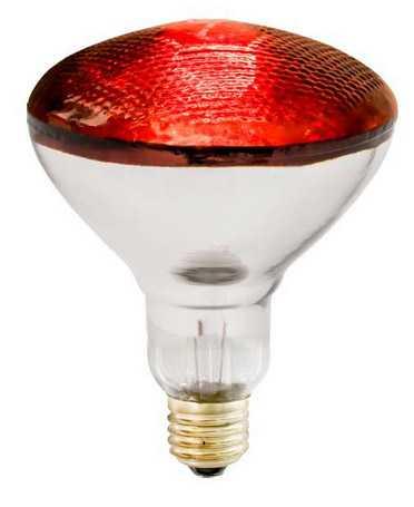 Уже скоро на складе компании ЭССА большое поступление ламп для обогрева домашних животных.