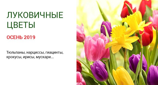Компания ОАО МинскСортСемОвощ рада предложить голландские луковичные цветы!