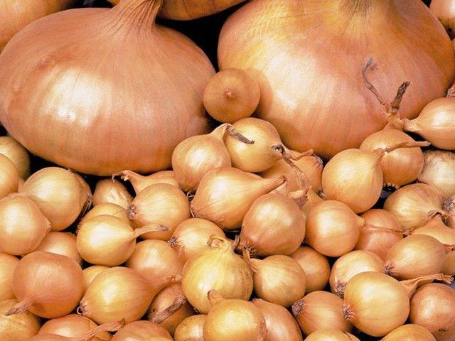 Компания ОАО МинскСортСемОвощ предлагает лук-севок отличного качества, производство - Голландия!