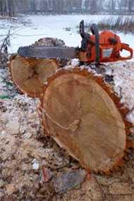 Спиливание деревьев в труднодоступных местах