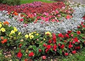 Посадка однолетнипх цветов