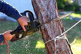 Вырезка (вырубка) деревьев (до 10 см. в диаметре)