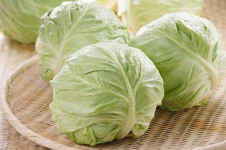 Выращивание капусты белокочанной