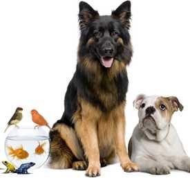 Гастроэнтерология для животных