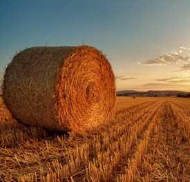 Агроэкономические исследования