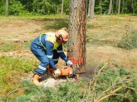 Обучение по профессии Вальщик леса