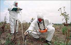 Проведение лабораторных исследований по определению радиоактивного загрязнения древесины