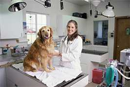 Акушерство и гинекология для животных