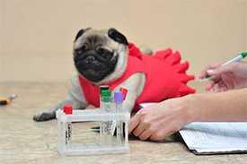 Лабораторная диагностика для животных