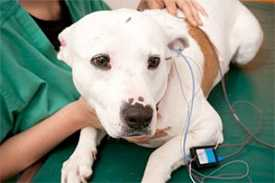 Неврология для животных