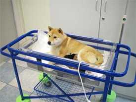 Общая терапия для животных