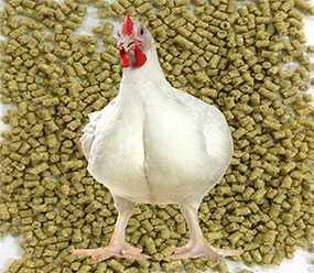 Изготовление комбикорма для цыплят-бройлеров из сырья заказчика (под заказ)