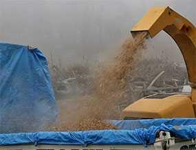 Вывоз на переработку отходов древесины