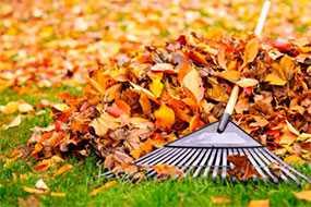 Уборка территории от листвы и растительного мусора