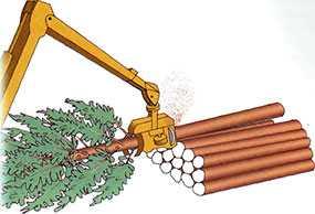 Сортиментная заготовка древесины