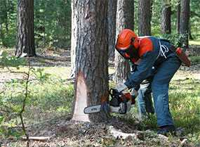 Заготовка древесины ручным способом
