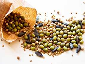 Обработка семян для посадки