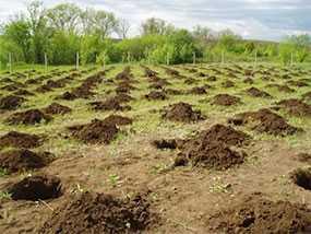 Подготовка территорий к закладке садов, ягодников, лесопосадки