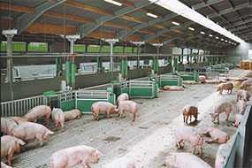 Строительство зданий и сооружений сельскохозяйственного назначения: свинарников (свиноферм)