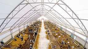 Строительство зданий и сооружений сельскохозяйственного назначения: телятников (коровников)
