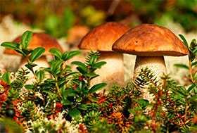 Отбор проб и испытания на соответствие показателям радиационной безопасности продукции лесного хозяйства