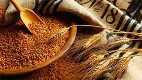 Испытания зерна на соответствие требованиям Технических регламентов Таможенного союза