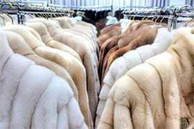 Испытания меха и меховых изделий по показателям механической и биологической безопасности