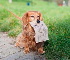 Реализация зоотоваров для выгула домашних животных